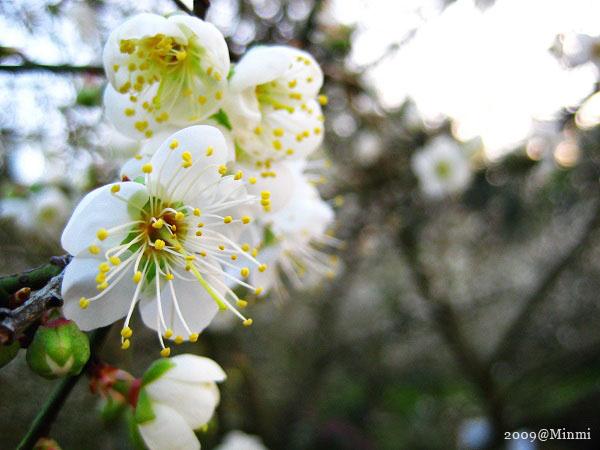 09,初春-烏松崙賞梅.jpg