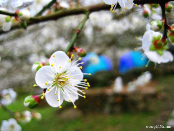 09,初春-烏松崙賞梅 (2).jpg