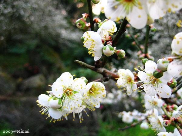 09,初春-烏松崙賞梅 (3).jpg
