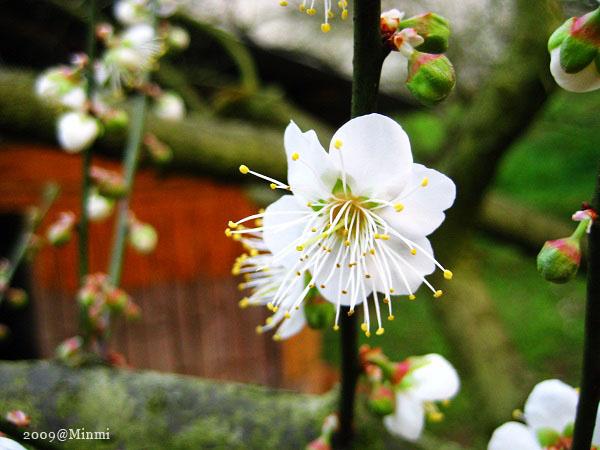 09,初春-烏松崙賞梅 (24).jpg