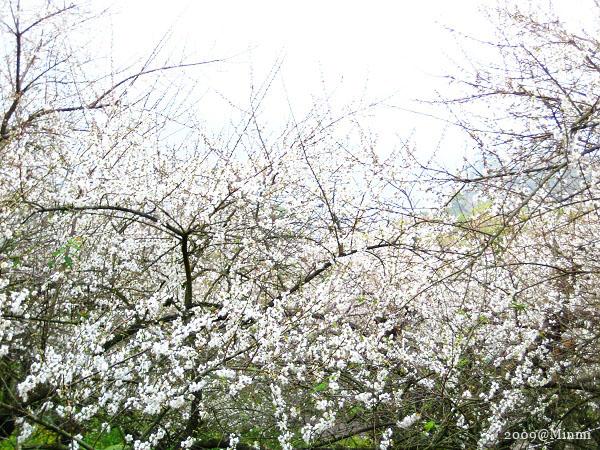 09,初春-烏松崙賞梅 (32).jpg