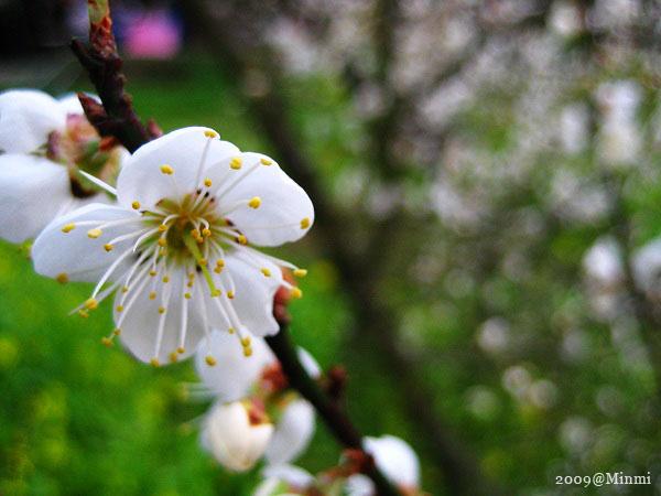 09,初春-烏松崙賞梅 (35).jpg