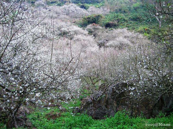 09,初春-烏松崙賞梅 (39).jpg