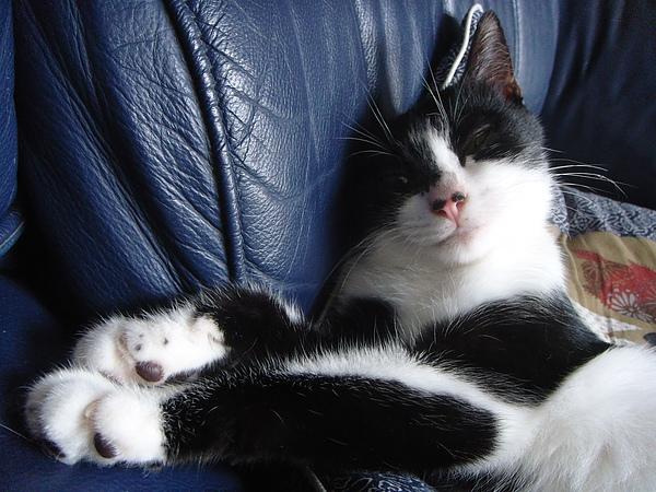 ˙對我的睡姿有意見嗎˙