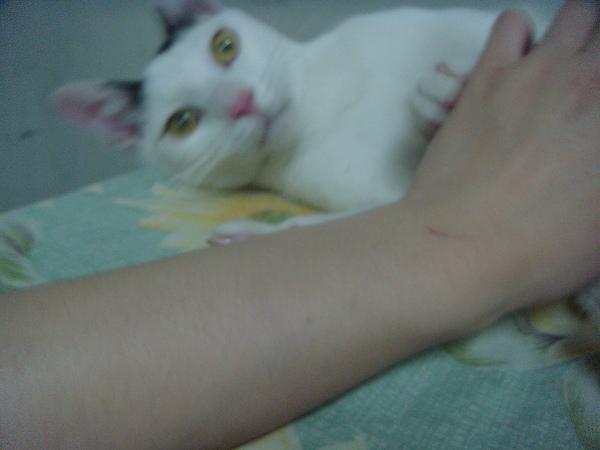 ˙小點子:幹嘛?沒看過貓撒嬌喔?˙