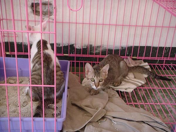 ˙這籠總共三隻,都是比較大的小貓˙