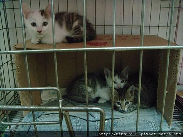 ˙還不親人的三小貓˙