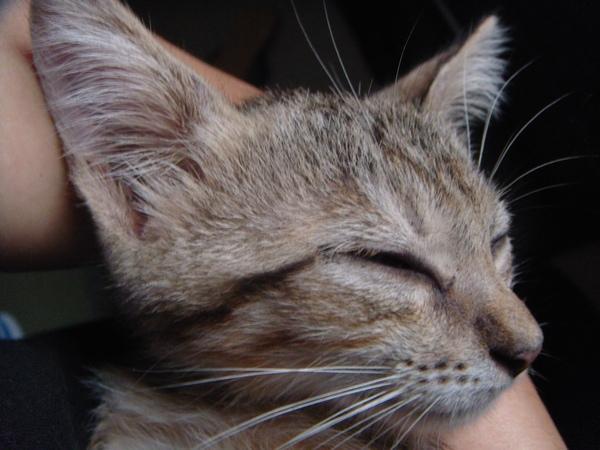 ˙這是我的睡臉˙