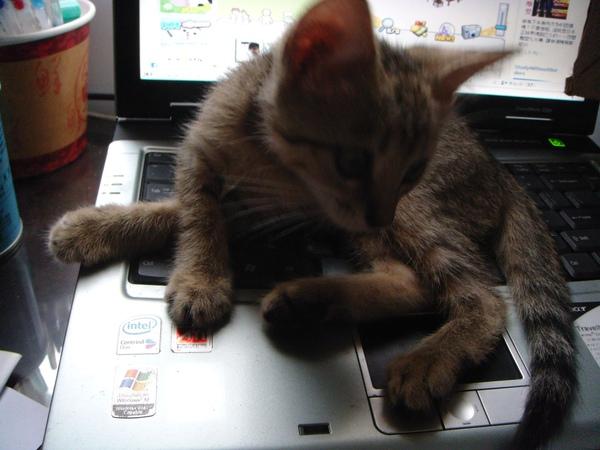 ˙霸佔阿姨的筆電˙