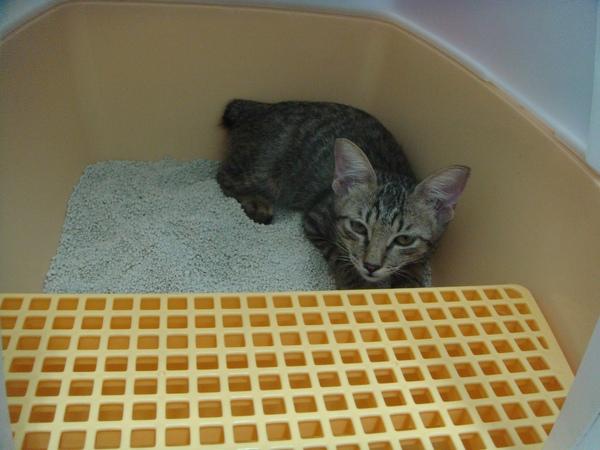 ˙我緊張到只敢躲在貓砂屋裡˙