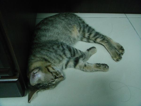 ˙我喜歡在書桌底下睡覺陪媽咪打電腦˙