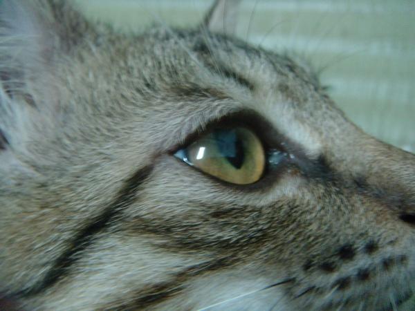 ˙我漂亮的大眼睛˙