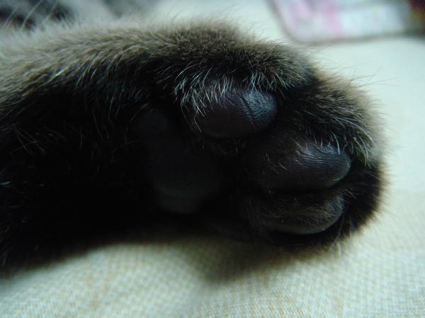 ˙雖然不粉可是很嫩的貓掌˙