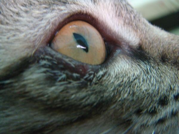 ˙右眼長黴菌˙