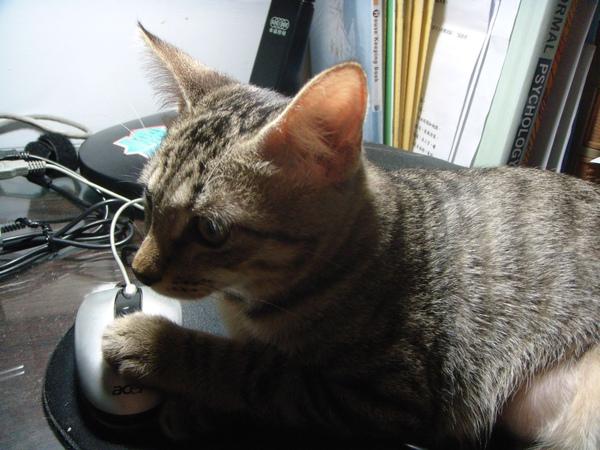 ˙我很認真的在學習如何用滑鼠˙
