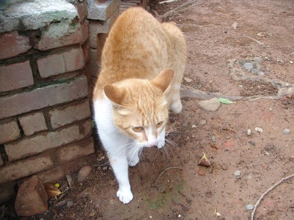 ˙第一次看到貓捍衛地盤的樣子˙