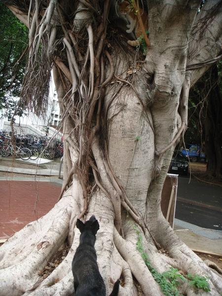 ˙結果跳到樹上的舉動反而讓黑狗起了興趣˙