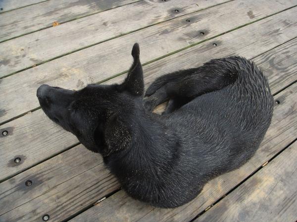 ˙黑狗也耍賴的趴在旁邊地上不走˙
