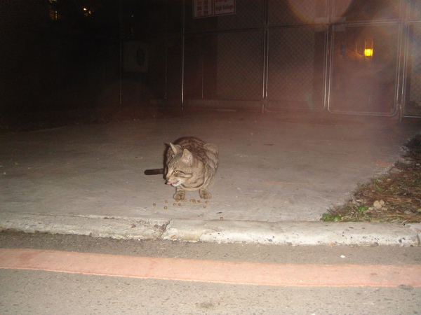 ˙怕人不怕閃光燈的小老虎˙