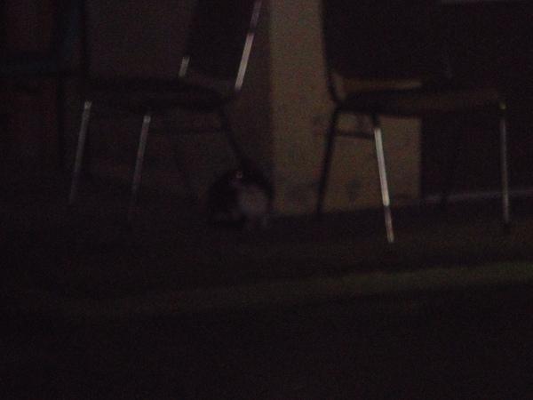 ˙意外出現的第四貓是黑白貓,更怕人所以躲超遠˙