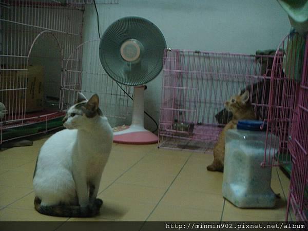 ˙沒人的時候會跑出來晃悠的兩貓˙
