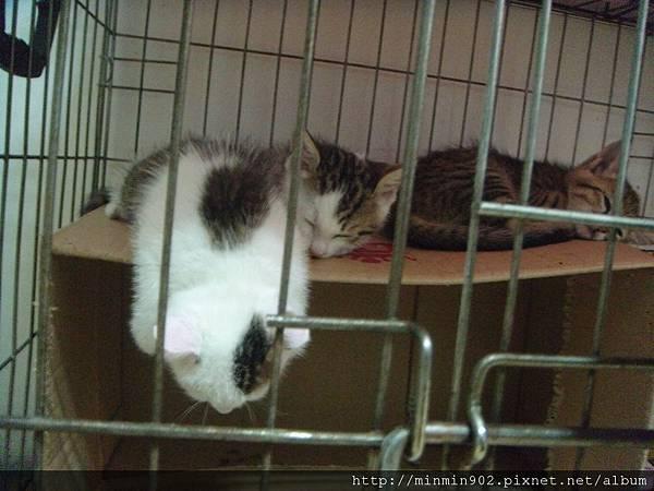 ˙睡著的三小貓˙