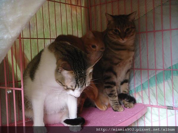 ˙三貓組˙