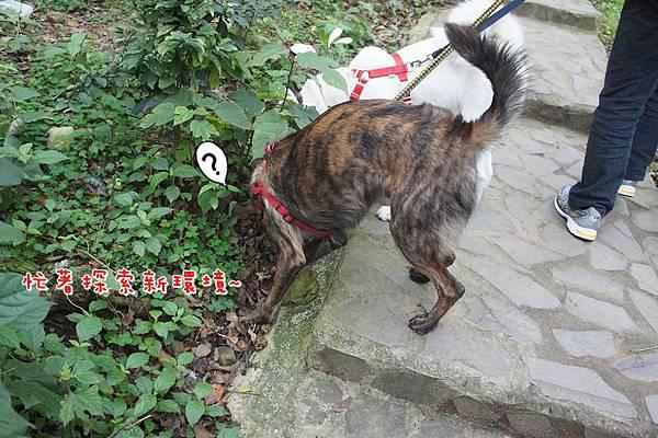 2012十八尖山賞花