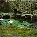 院前的小池塘