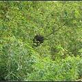 竹林中的蜂巢