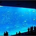 世界最大的水族箱