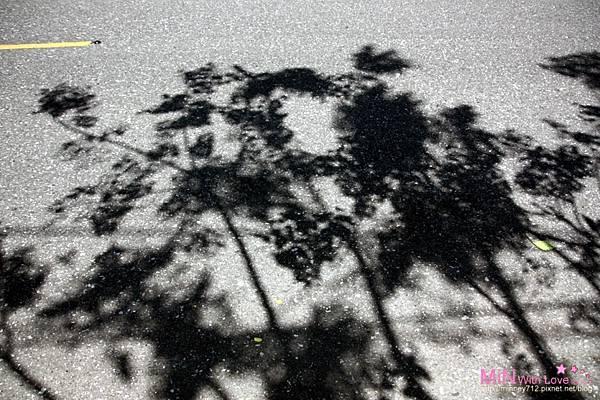 PhotoCap_025.jpg