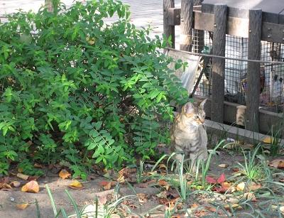 可愛的小野貓