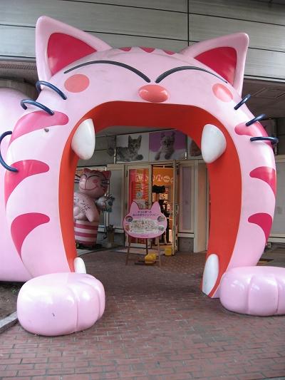 好Cute的貓貓店