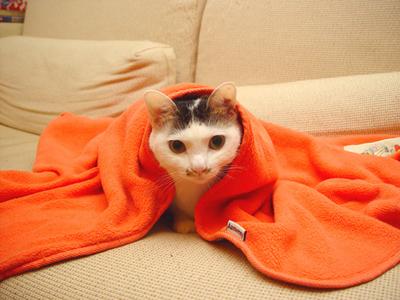 宇宙無敵霹靂怕冷貓