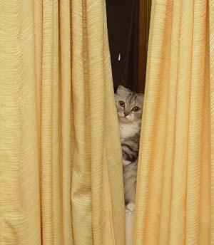 很愛躲貓貓