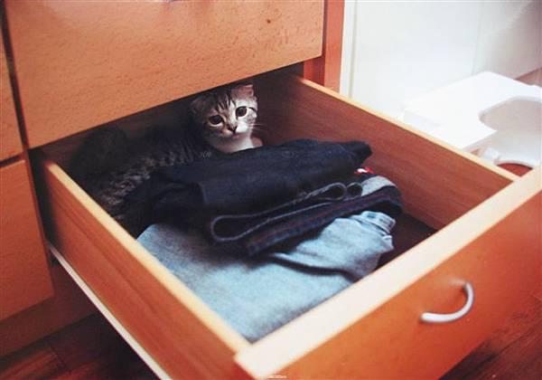 貓咪最愛躲了
