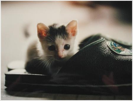 像小白鼠的小貓 XD