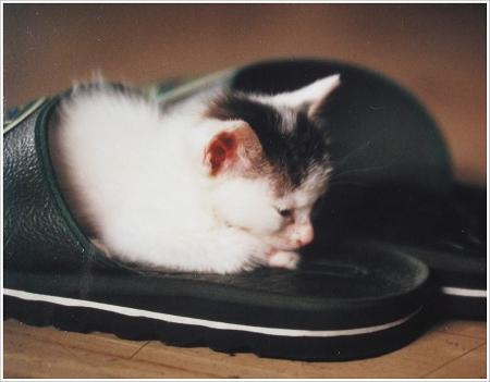 咪彌小時候愛窩在拖鞋裡