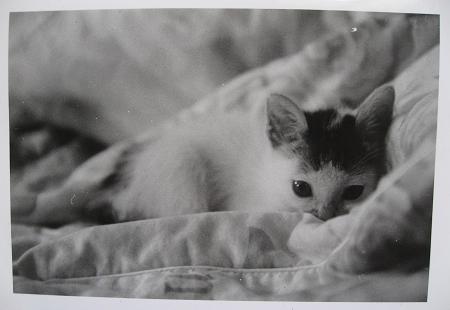 棉被上窩著一隻小小貓