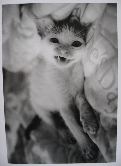 惡魔貓~經典!(其實是在打哈欠 XD)