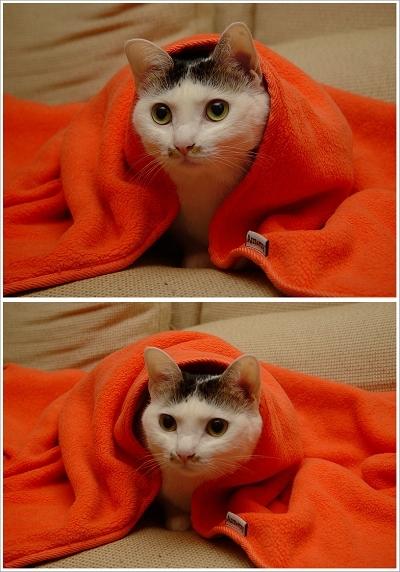 好冷好冷!