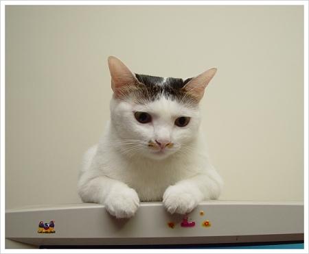 窩在電腦上的宅貓