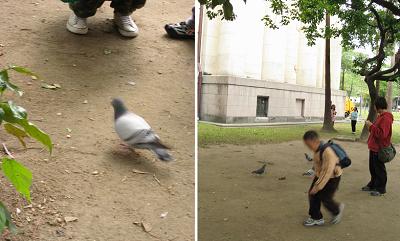 鴿子.jpg