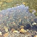 清澈見底的小溪及為數眾多的小魚