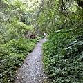 旁邊都是樹蔭,好走的步道