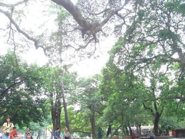 孔廟前廣場