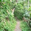 綠水合流步道-1