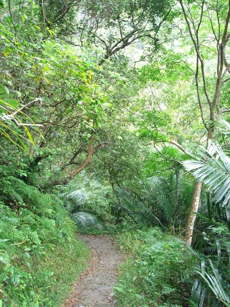 綠水合流步道-2