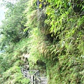 綠水合流步道-4